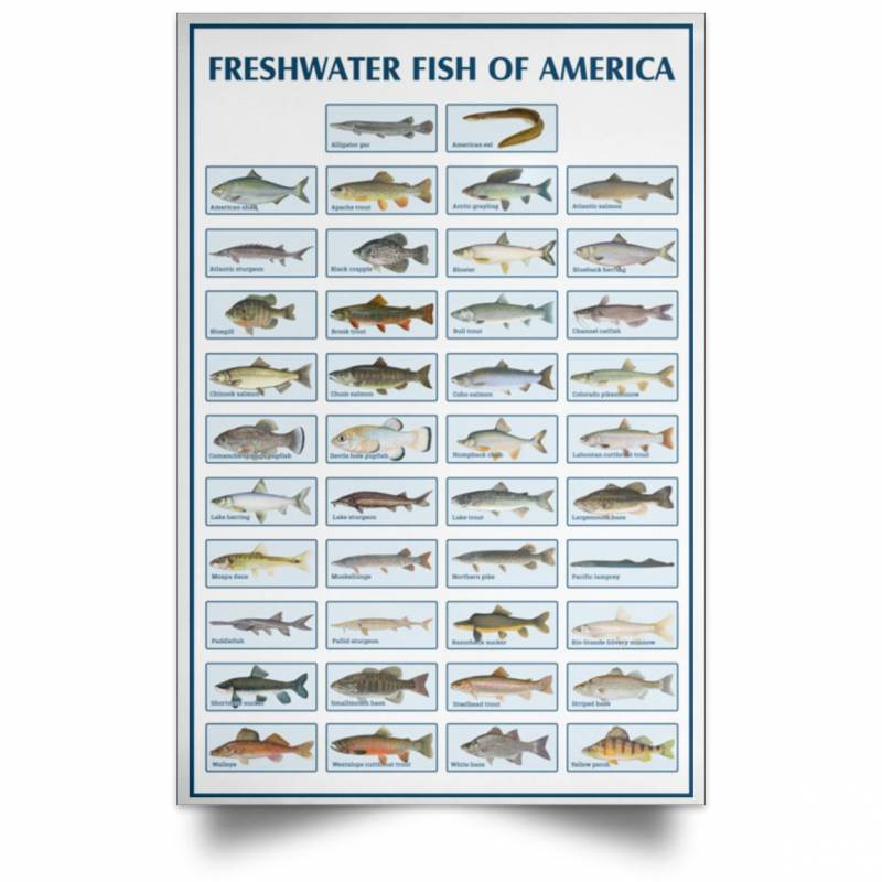 Freshwater fish Poster No Frame