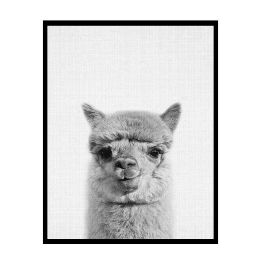 B&W Llama Poster