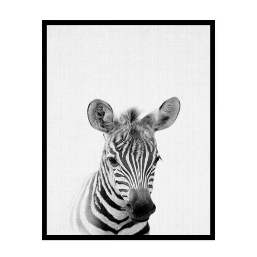 B&W Zebra Poster