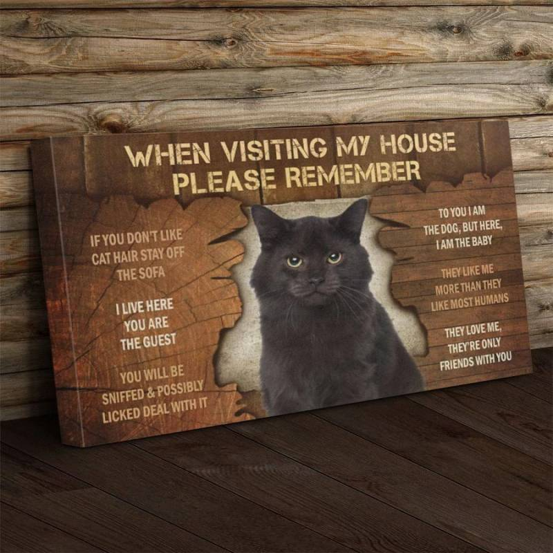 Cat Visiting Poster Canvas 312320927