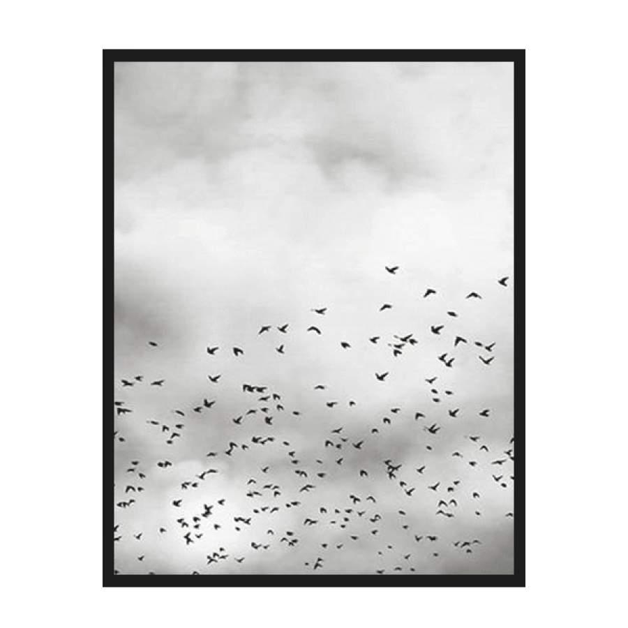 Birds B&W Poster